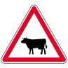 a15a1_passage_animaux_domestique_metropole_equipements